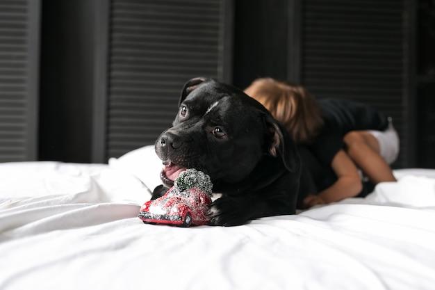 Un garçon embrasse un chien jouant un jouet de noël