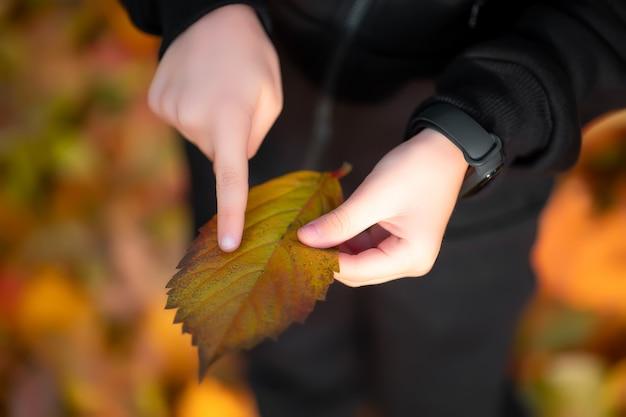Le garçon a une feuille d'automne dans ses mains, sur laquelle il pointe du doigt ses veines.
