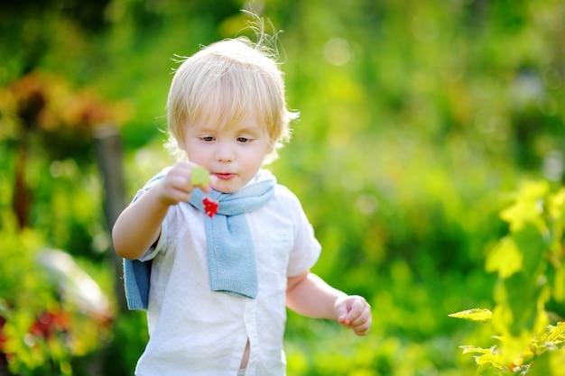 Garçon mignon bambin cueillant des groseilles rouges dans le jardin domestique