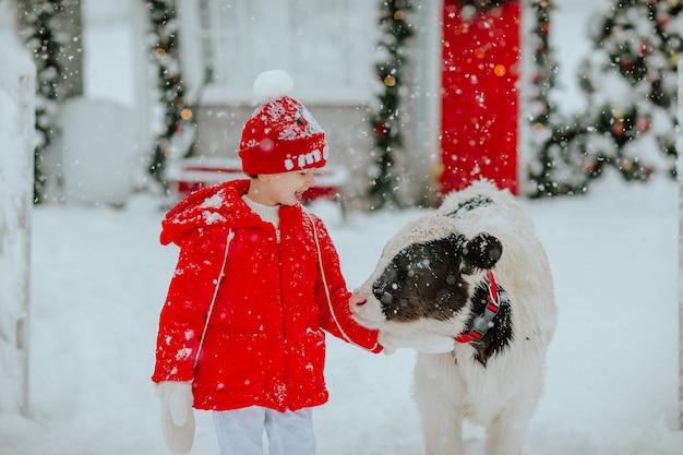 Garçon posant avec petit taureau au ranch d'hiver avec un décor de noël. il neige.