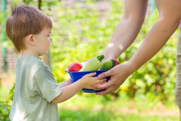 Le garçon tient un bol avec une récolte estivale de légumes. l'agriculteur et l'enfant cueillent les tomates, les concombres et les courgettes du potager