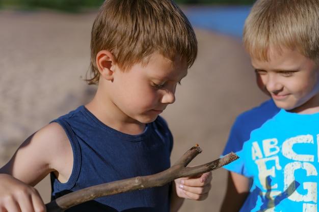 Garçons caucasiens mignons regardant une coccinelle se reposant sur le bâton en bois. soirée d'été sur la plage. photo de haute qualité