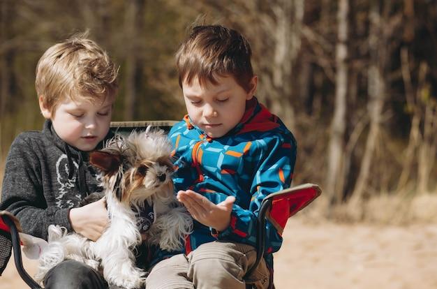 Les garçons jouent avec un chien yorkshire terrier assis sur une chaise sur la plage