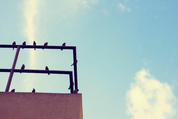 Garde-corps sur le toit birds blue sky