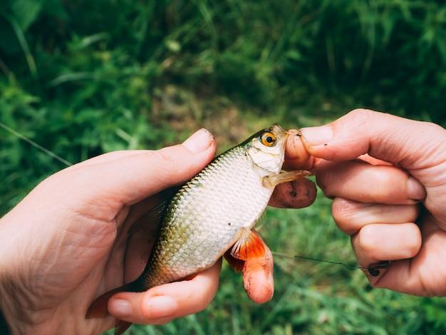 Gardon de poisson