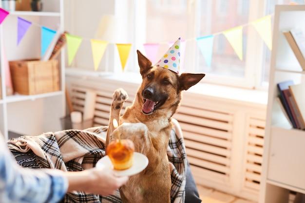 Gâteau d'anniversaire pour chien