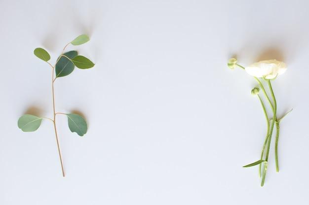 Sur la gauche se trouve un brin d'eucalyptus, à droite une fleur de renoncule, flatlay.