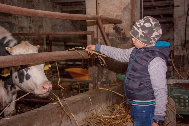 Gavello, italie 23 mars 2020 : enfants en contact avec les vaches à la ferme