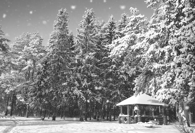Gazebo en bois monochrome dans la forêt en journée ensoleillée d'hiver