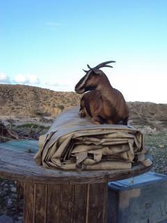 La gazelle des montagnes