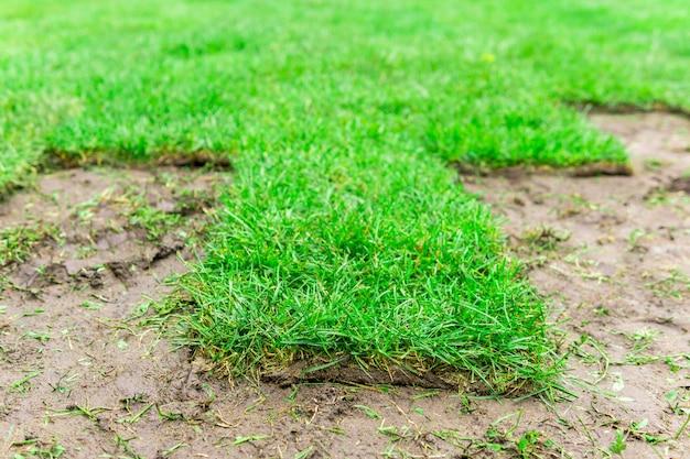 Gazon roulé en train de poser sur le sol, gros plan