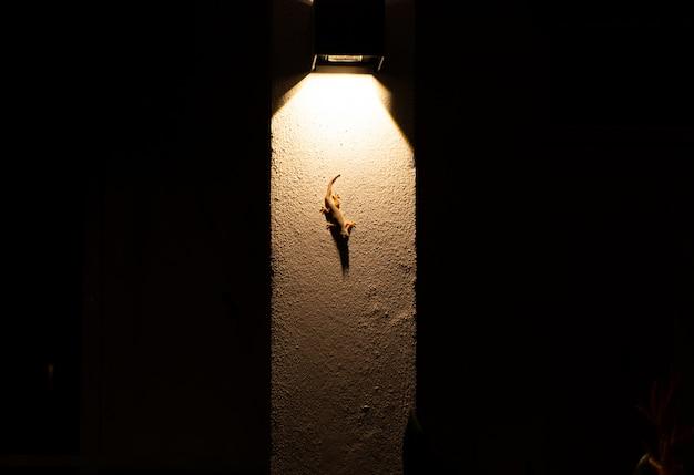 Gecko est assis sur un mur éclairé par une lanterne