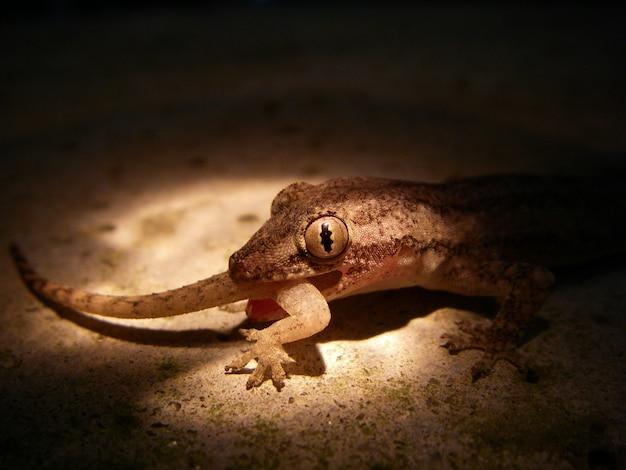 Gecko manger du gecko, vous êtes ce que vous mangez