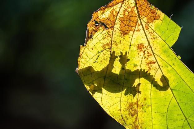 Gecko volant sur la feuille