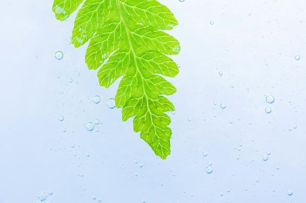 Gel cosmétique translucide sur le dessus sont des feuilles vertes fraîches.