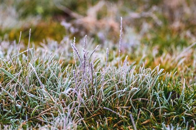 Le gel a couvert l'herbe verte dans la forêt