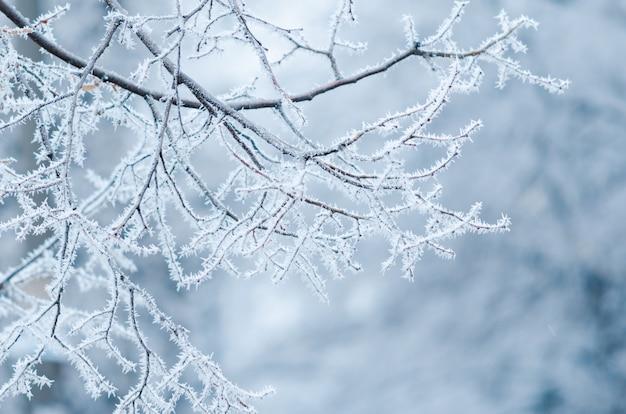 Gelée blanche sur des branches d'arbres. journée d'hiver froide, hiver naturel