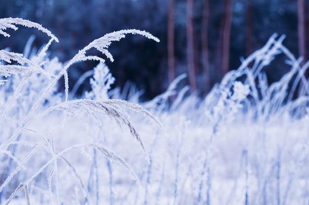 Gelée blanche sur un champ de branche d'herbe