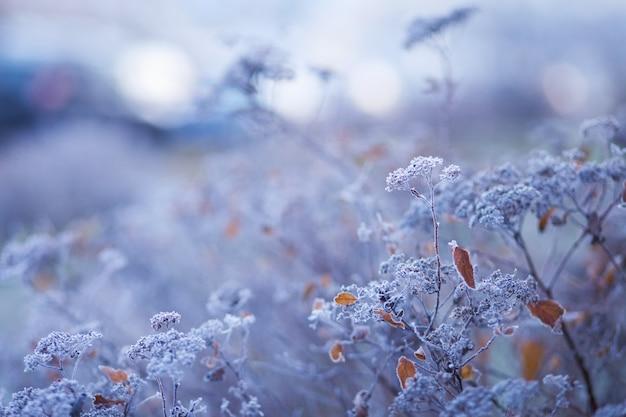 Gelée blanche sur l'herbe sèche dans le pré