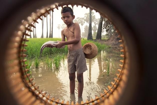 Gens d'agriculteur asiatique garçon sur le champ de riz vert au cours de la matinée