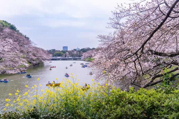 Les gens montent sur le bateau à aubes dans le canal de chidorigafuchi pour voir cherry blossom.