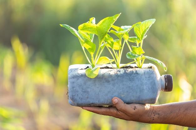 Gens, planter légume, dans, bouteille plastique