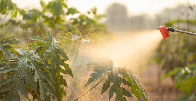Gens, pulvérisation, eau, ou, engrais, jeune, arbre, jardin