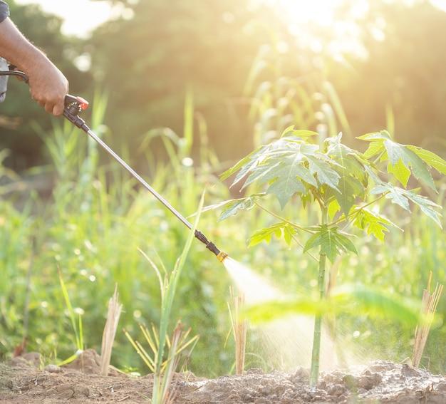 Gens, pulvérisation, eau, ou, engrais, jeune, papaye, jardin