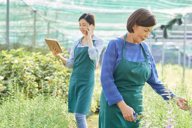 Les gens qui cultivent des plantes en serre