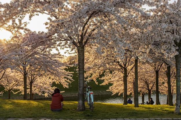 Les gens se détendre sous les cerisiers en fleurs dans le parc de la ville