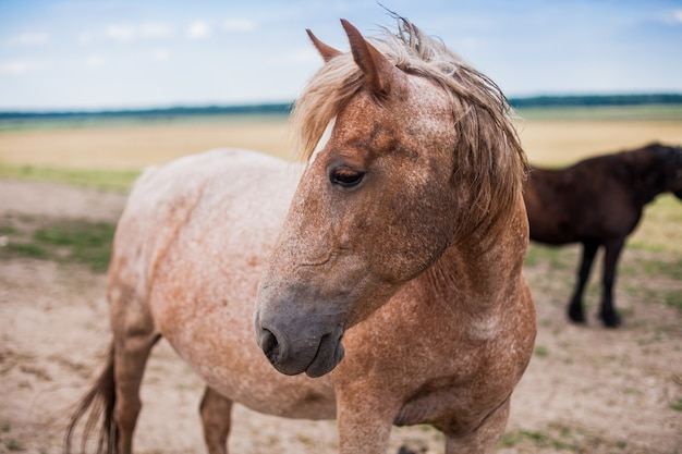 Gentil beau cheval