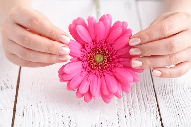 Gerbera fleur rose dans les mains des femmes, vue rapprochée concept de soins aux femmes