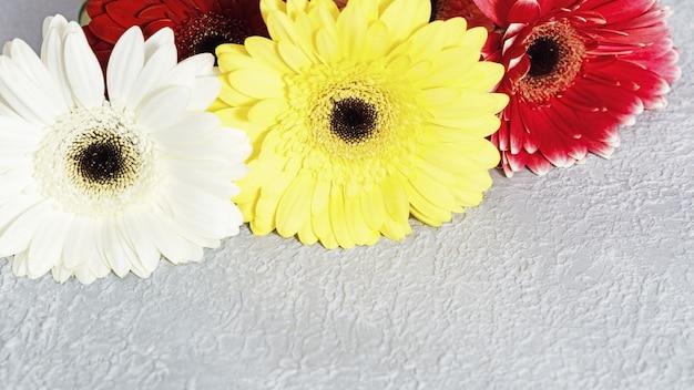 Gerbera fleurit avec copie espace. vacances avec bouquet de belles fleurs naturelles couleurs rose, jaune et rouge. mise au point sélective.