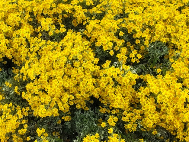 Gerbera jaune fleurs sur fond de fleurs