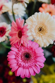 Gerbera roses et blanches