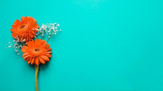 Gerberas et fleurs blanches