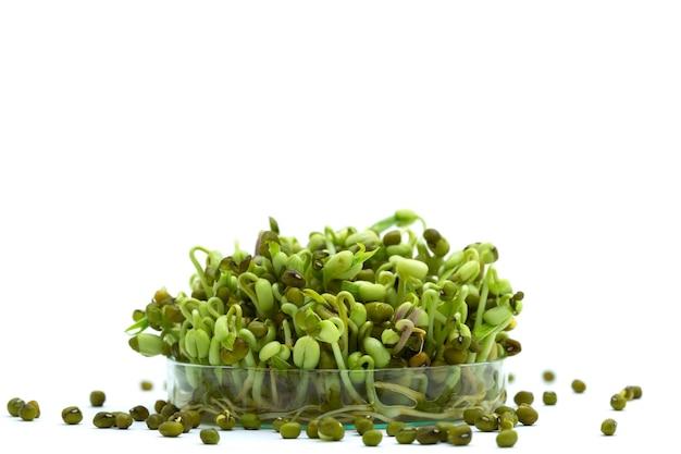 Germes de haricots en boîte de pétri génétiquement modifiés