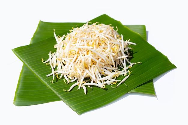 Germes de soja sur feuilles de bananier