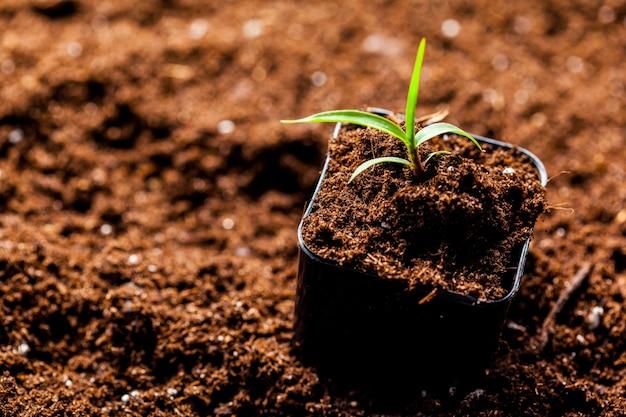 Des germes verts ont germé dans le sol