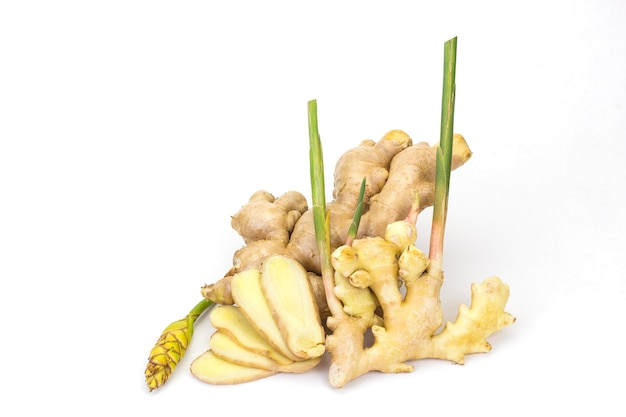Le gingembre et la fleur de gingembre fond blanc le gingembre est une plante annuelle à rhizomes souterrains