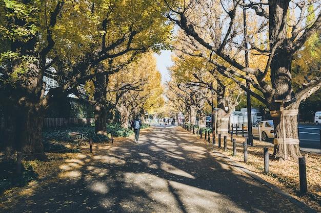 Ginkgo jaune d'automne à tokyo