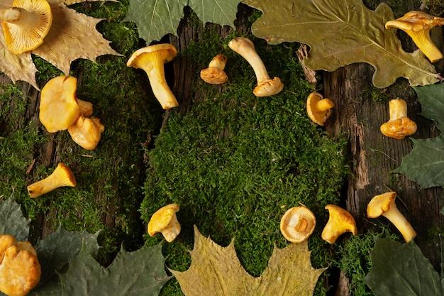 Girolles fraîches et feuilles d'érable et de chêne sèches sur de vieilles planches en bois avec de la mousse