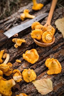 Girolles jaunes sur une surface en bois. nourriture gastronomique.