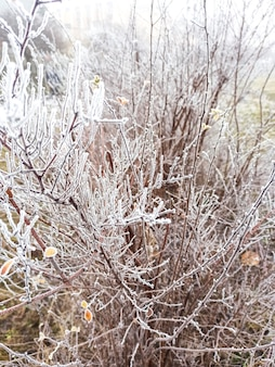 Givre sur les arbres et les buissons. temps d'hiver froid.