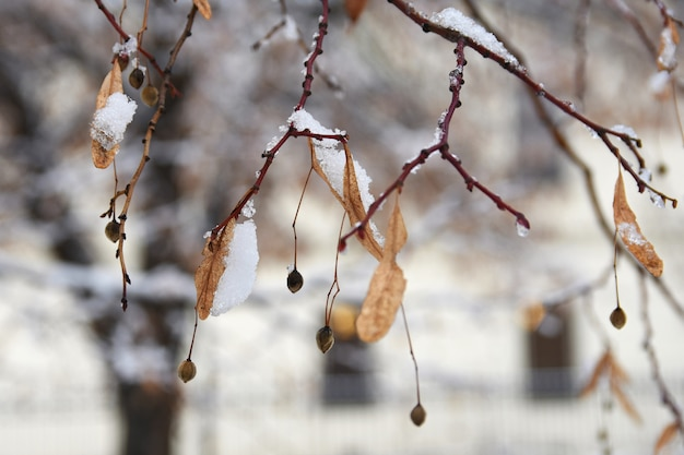 Givre sur les branches. beau fond naturel saisonnier d'hiver.