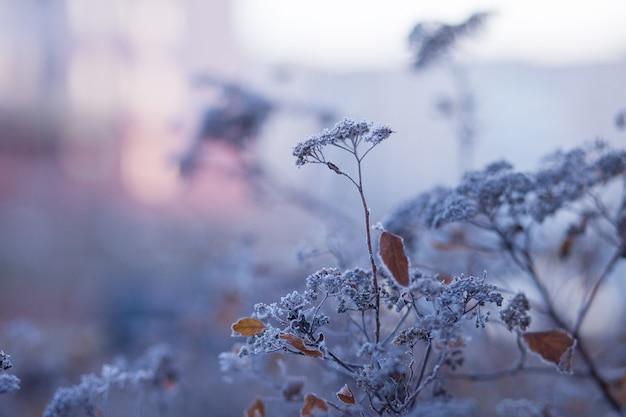 Givre sur l'herbe sèche dans le pré. herbe couverte de givre, fleurs sauvages et buissons. premier gel dans la prairie de la campagne d'automne. coucher ou lever de soleil