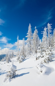 Givre d'hiver et sapins couverts de neige à flanc de montagne (carpates, ukraine)