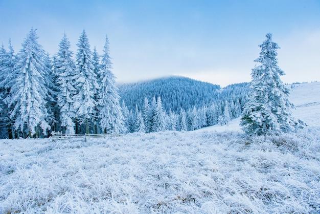 Givre en montagne hivernale