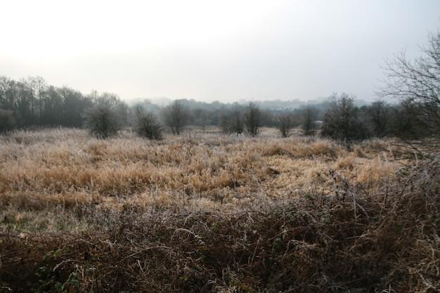 Givre de tir panoramique sur les herbes et les arbres sur un champ