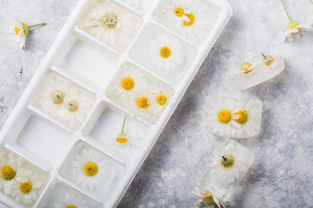 Glaçons avec des fleurs de camomille à l'intérieur